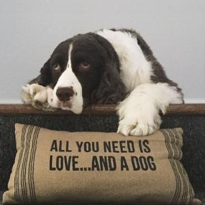 All You Need Is Love ... And A Dog by K^ Lowenkron