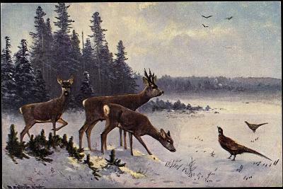 K?nstler M?ller, Rehe Im Wald, Winter, Fasane, V?gel--Giclee Print