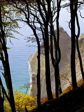 Germany, Ruegen Jasmund National Park, Beeches on the Shore Wissower over the Baltic Sea