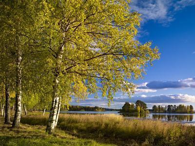 Sweden, Dalarna, Autumn at Orsa Lake, Birch, Tree Islands
