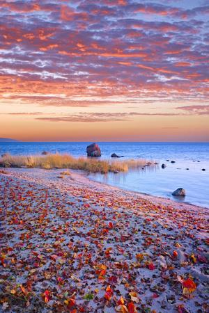 Sweden, Fall by the Hano Bay, Red Autumn Leaves on the Sandy Beach, Red Morning Sky, Baltic Beach