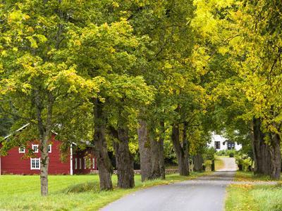 Sweden, Smaland, Ahornallee with Farmhouse in Savsjo, Autumn
