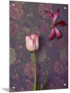 Pink Tulip and Lily by K.T.