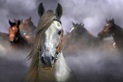 Horses by Kadir Civici