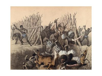 Kaffirs Driving Animals into a Pit--Giclee Print