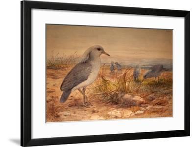 Kagu (Rhinochetus Jubatus), C.1851-76-Joseph Wolf-Framed Giclee Print