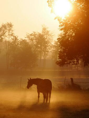 A Horse Stands in a Meadow in Early Morning Fog in Langenhagen Germany, Oct 17, 2006 by Kai-uwe Knoth