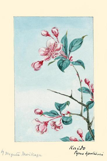 Kaido Pyrus Spectabalis-Megata Morikaga-Art Print