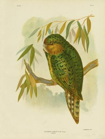 https://imgc.artprintimages.com/img/print/kakapo-1891_u-l-pum2rr0.jpg?p=0