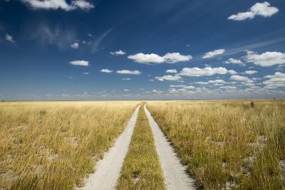 Kalahari Desert Track, Magadikgadi Pans National Park, Botswana-Paul Souders-Photographic Print
