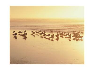 Kalaloch Sunset II Crop-Laura Marshall-Art Print