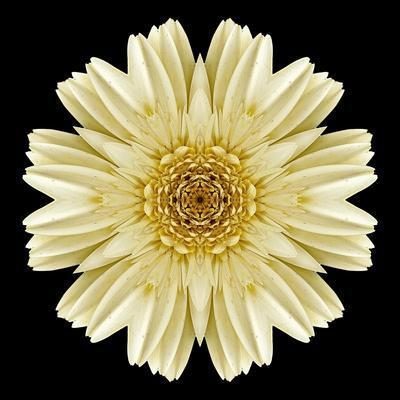 https://imgc.artprintimages.com/img/print/kaleidoscope-daisy-black_u-l-q12vwyh0.jpg?p=0