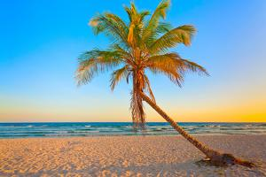 A Coconut Tree on a Deserted Tropical Beach at Sunset by Kamira