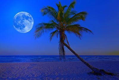 The Moon Shining in a Deserted Tropical Beach at Midnight with a Coconut Palm Tree in the Foregroun
