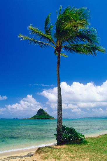 Kaneohe Bay Palm Tree, Hawaii-George Oze-Photographic Print