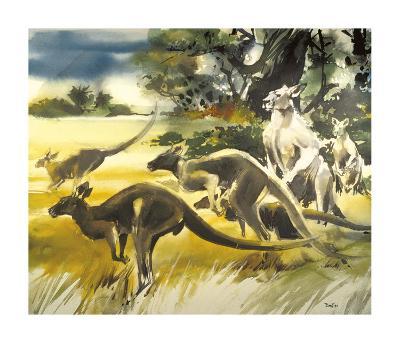 Kangaroo-Wolfgang Weber-Premium Giclee Print