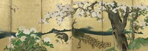 Cherry Blossoms and Peacocks by Kano Sansetsu