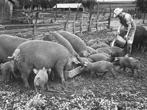 Kansas Farm Boy Dan Gardner Feeding a Mixture of His and His Father's Hogs Skim Milk