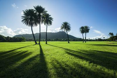 Kapiolani Park Classic Treeline-Cameron Brooks-Photographic Print
