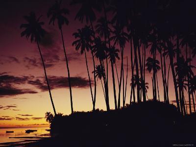 Kapuaiwa Coconut Grove Contains the Last Surviving Royal Coconut Palms--Photographic Print