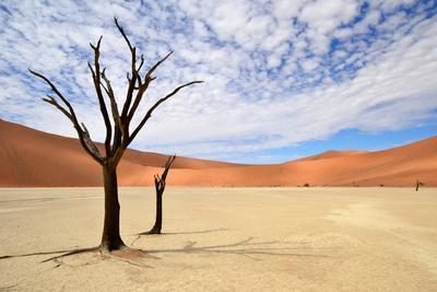 Deadvlei,Namib Desert,Namibia