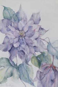 Clematis, Lord Neville by Karen Armitage