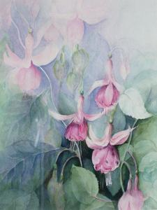 Fuschia, Pink Coachman by Karen Armitage