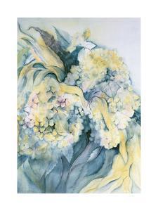 Hydrangea Particulata by Karen Armitage
