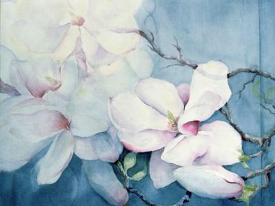 Magnolia Soulangeana (Horizontal)