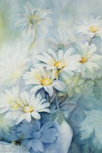 Marguerites, Alexandria by Karen Armitage