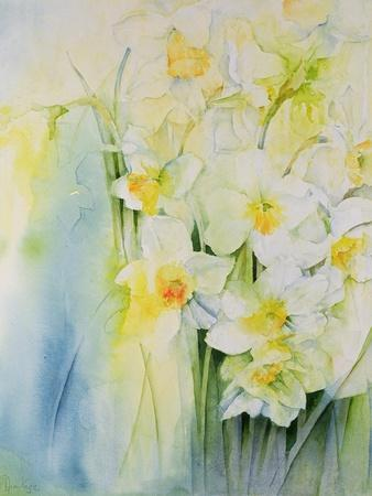 Narcissi and Freesia