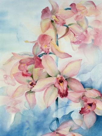 Orchid Cymbidium Ramley
