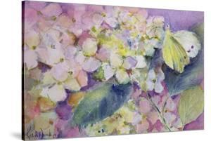 Pale Clouded Yellow Butterfly, Colias Hyale on Hydrangea by Karen Armitage