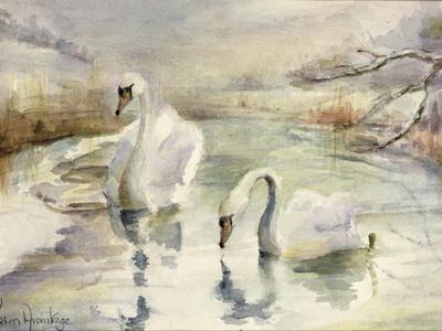 Swans in Winter