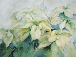 White Poinsettia by Karen Armitage