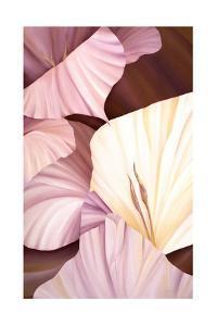 Codius Gladiolus by Karen Cole