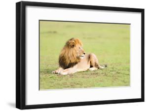 Lion, Masai Mara, Kenya, East Africa, Africa by Karen Deakin