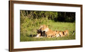 Lioness and cubs, Masai Mara, Kenya, East Africa, Africa by Karen Deakin