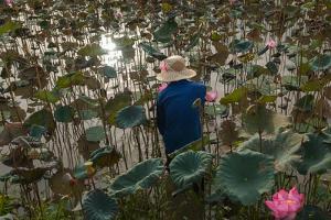 A Lily Pond Near Phong Triu in the Danang Area of Vietnam by Karen Kasmauski
