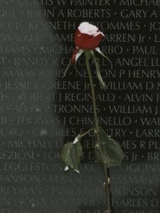 A Snow Dusted Rose Speaks of Lasting Love at a War Memorial by Karen Kasmauski