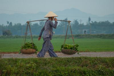 Carrying Vegetables to Market around Phong Triu in the Danang Area of Vietnam by Karen Kasmauski