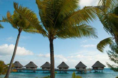 Palm Trees and Vacation Cottages over Water on Bora Bora