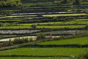 Rice Growing in the Quan Tri are of Vietnam by Karen Kasmauski