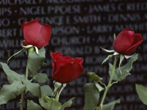 Roses Glow against the Black Granite of the Vietnam Veterans Memorial by Karen Kasmauski
