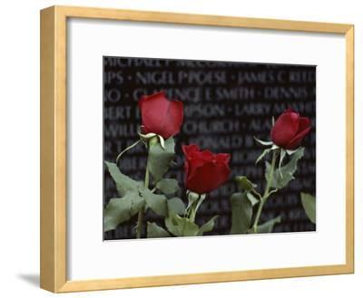 Roses Glow against the Black Granite of the Vietnam Veterans Memorial