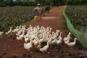 Rural Scenes around Phong Triu in the Danang Area of Vietnam by Karen Kasmauski