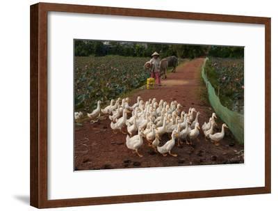 Rural Scenes around Phong Triu in the Danang Area of Vietnam