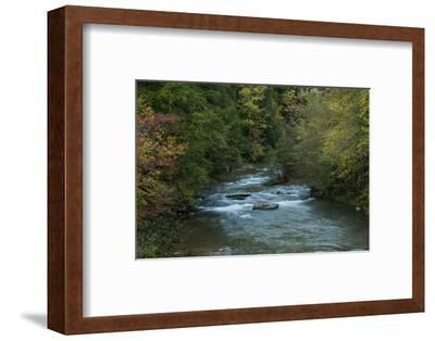 Stream Flowing During Autumn