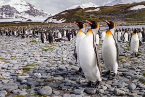 Penguins of Salisbury Plain by Karen Lunney