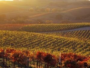 Carneros Ava. Scenic, Carneros, Napa Valley, California by Karen Muschenetz